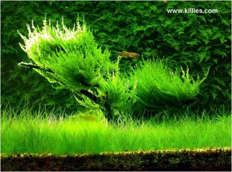 Aquascape on Pinterest Aquascaping, Aquarium and Planted Aquarium
