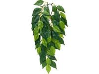 Plante cataratoare Exo Terra - Fikus Medie (Matase) thumbnail