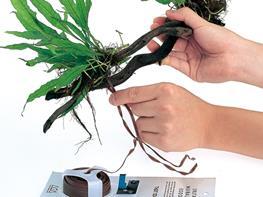 Element fixare moss si plante pe decoruri ADA Wood Tight (10m) thumbnail