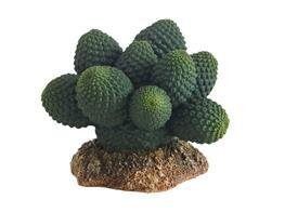 Decor terariu Hobby Cactus Atacama 7cm thumbnail