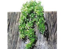 Planta decor JBL TerraPlanta Canabis - Canabis M26 thumbnail