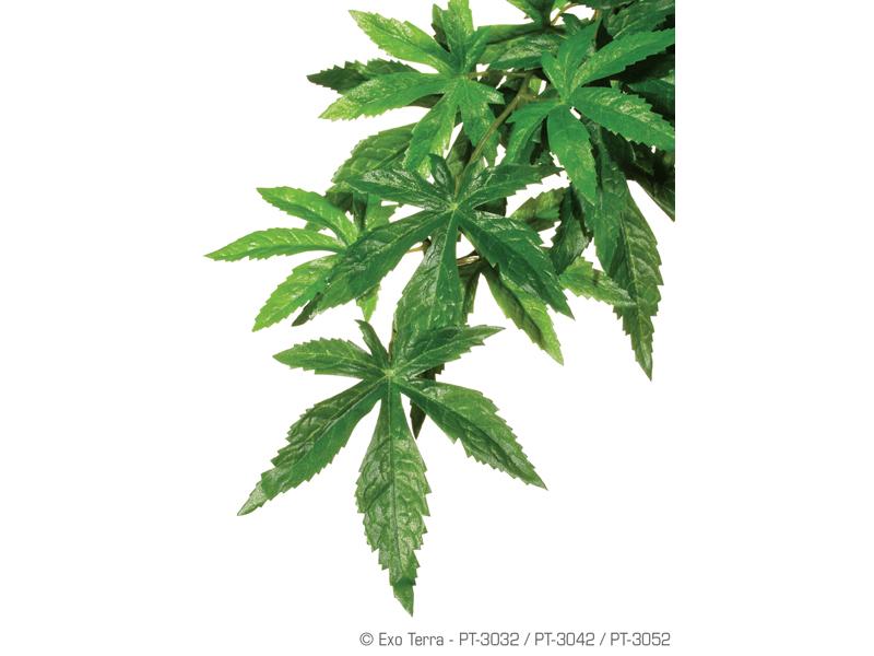 Plante spanzuratoare exo terra for Plante jungle
